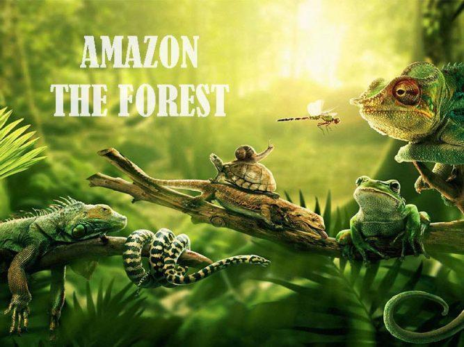 ลุ่มน้ำอเมซอนกับสัตว์ป่าที่น่ากลัว
