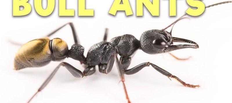 ทำความรู้จักสัตว์ และป้องกันแมลงที่มีพิษในป่า