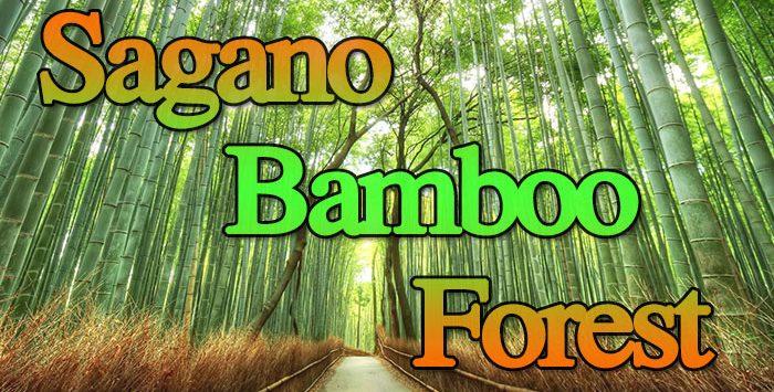 ป่าไผ่ซากาโนะ สัมผัสธรรมชาติสุดอัศจรรย์ที่ เกียวโต